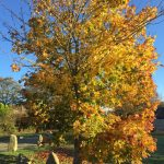 Autumn tree The Green