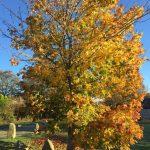 Autumn tree The Green
